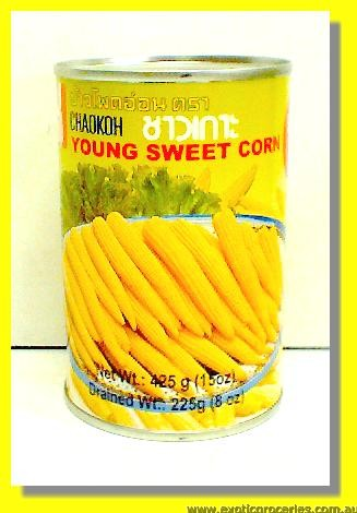 Young Sweet Corn Size MM 15up